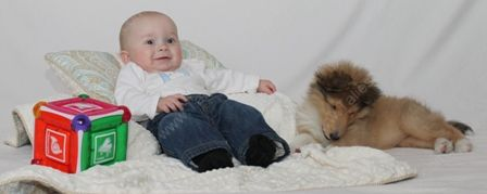 WM_Gallery_01-02-11_Sable_and_White_Female_Puppy_8_weeks_and_Baby3