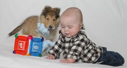 WM_Gallery_01-02-11_Sable_and_White_Female_Puppy_8_weeks_and_Baby6
